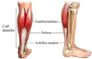 calf muscle back pain